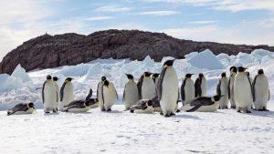 Be a pingüino, my friend